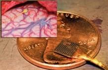 чип, мозг.jpg