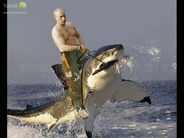 путин, акула.jpg