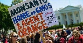 Международный трибунал обвиняет Monsanto в совершении преступлений против планеты и человечества
