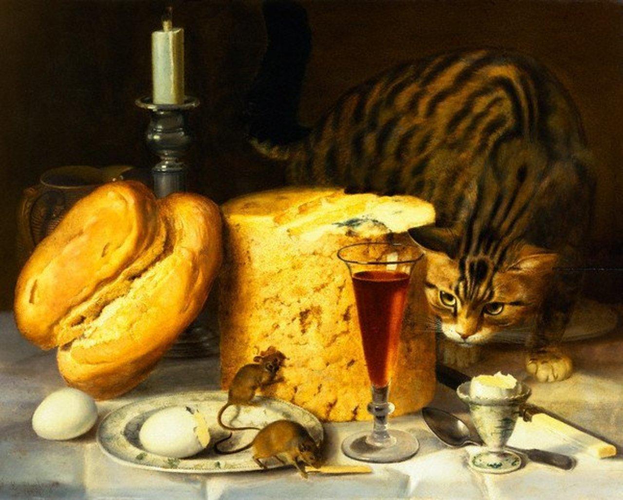 кошка ест сыр